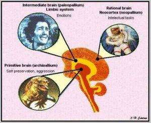 i-tre-cervelli